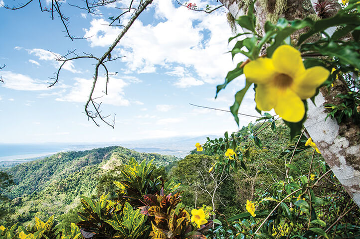 Beautiful flowers frame the Central American vista of mountains