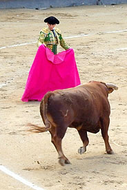 A bullfighter holding a red cape in front of a bull