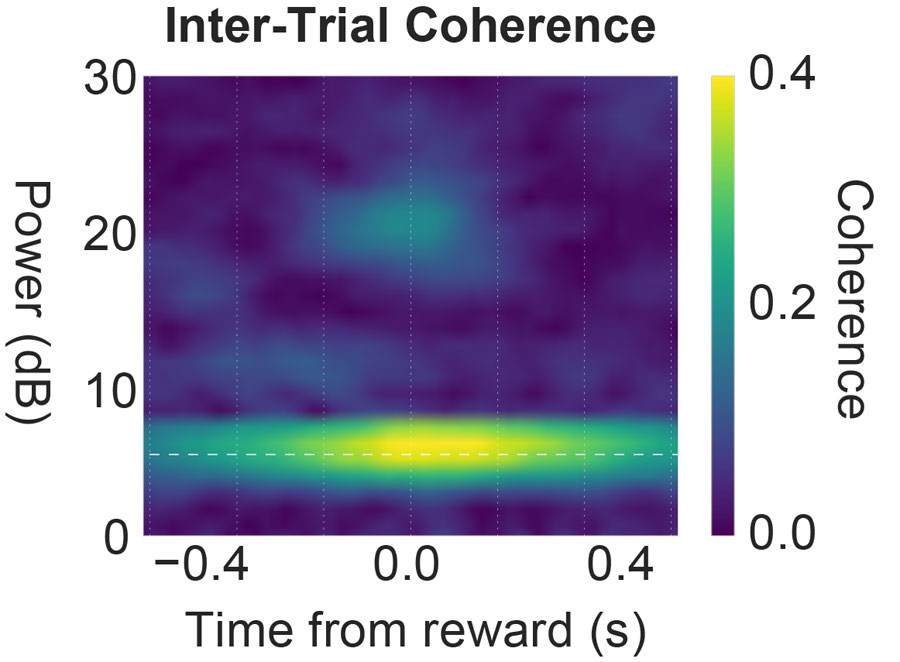 inter-trial coherence: reward value