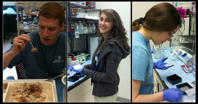 Bio undergraduate research