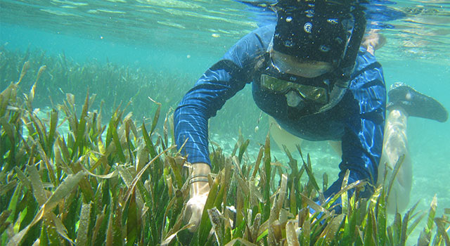 AU student snorkeling on research expedition.