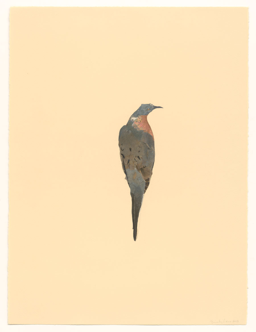 Passenger Pigeon by Beverly Ress