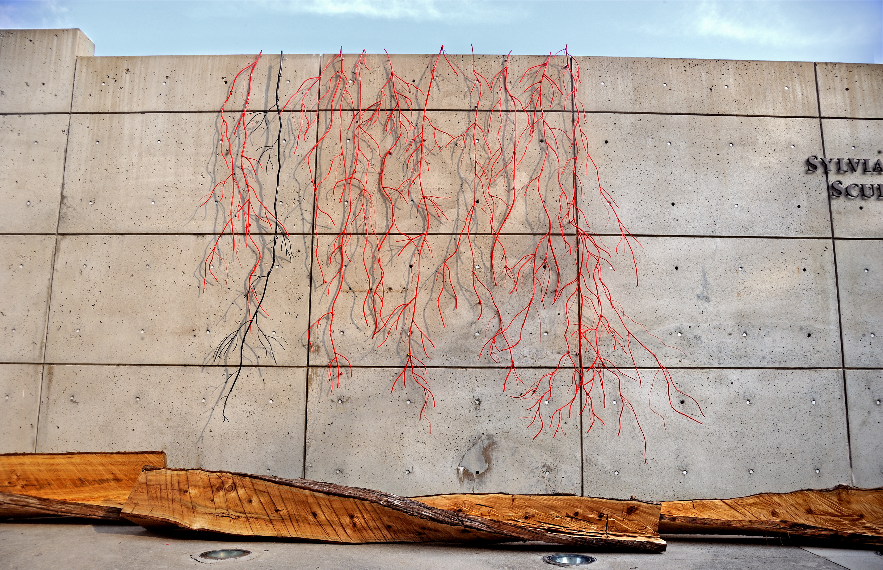 Contemporary sculptural installation with vertical cedar trees and red vine-like metal sculptures hanging from the walls