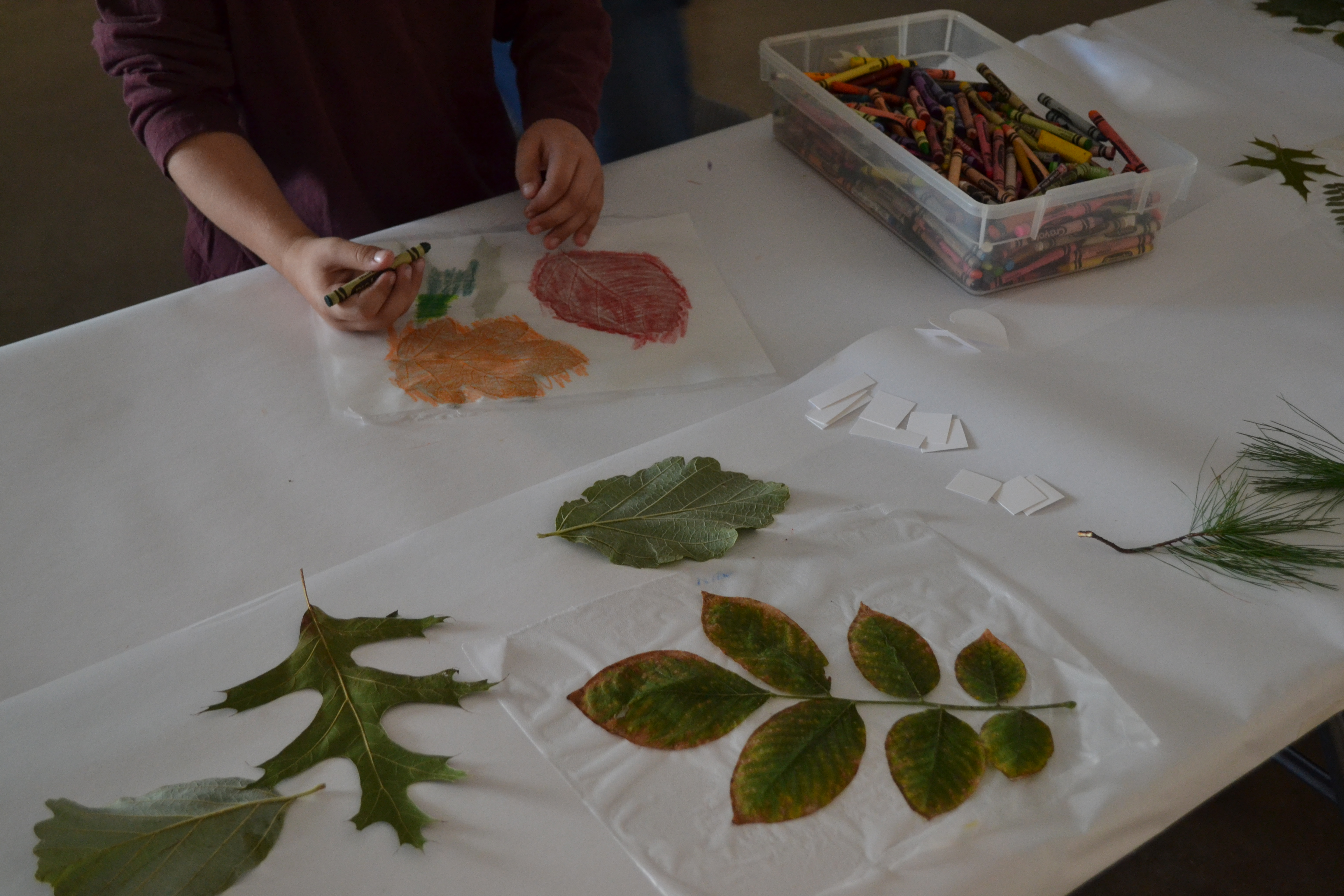 Leaves for crafting on table