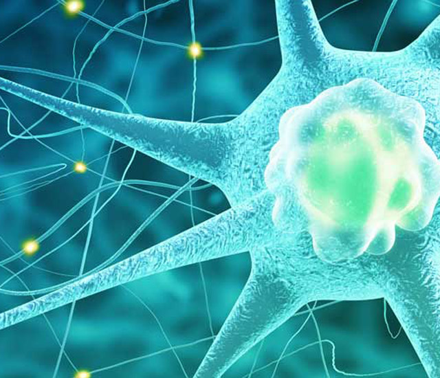 Why Educators Trained In Neuroscience >> Behavior Cognition And Neuroscience American University