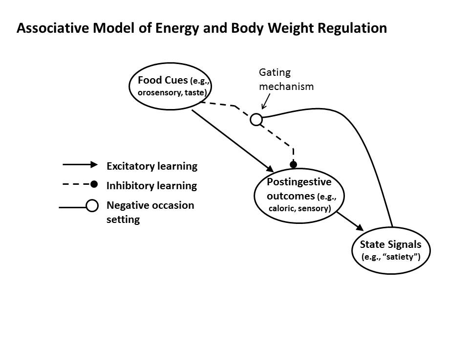Associative Model of Energy and Body Weight Regulation