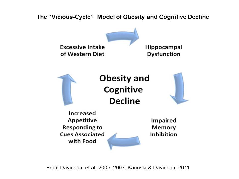 Vicious Cycle Model of Obesity and Cognitive Decline