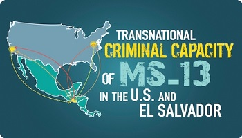 Transnational Capacity of the MS13 project logo