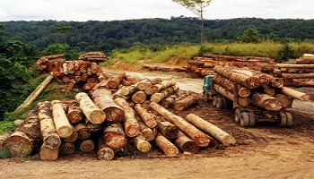 Illegal logging in South America