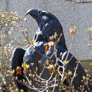 Alumni and students alike visit the Eagle statue on campus.