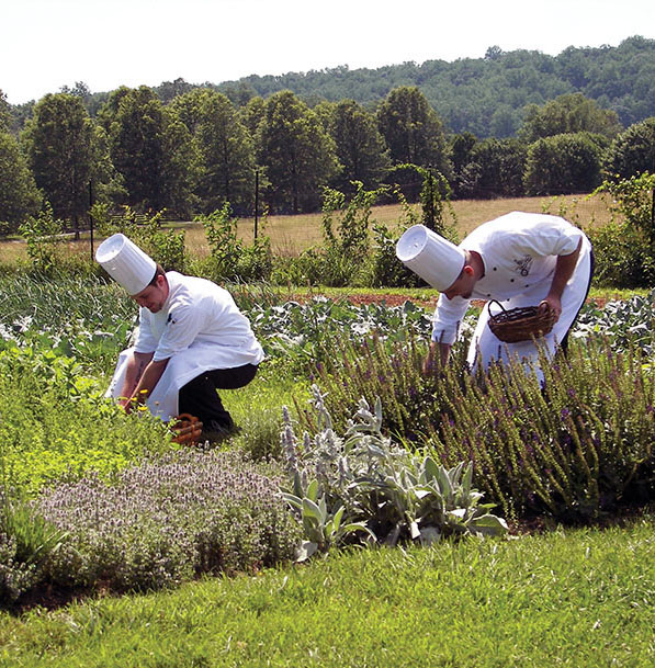 Two chefs select fresh produce from one of the Airlie gardens.