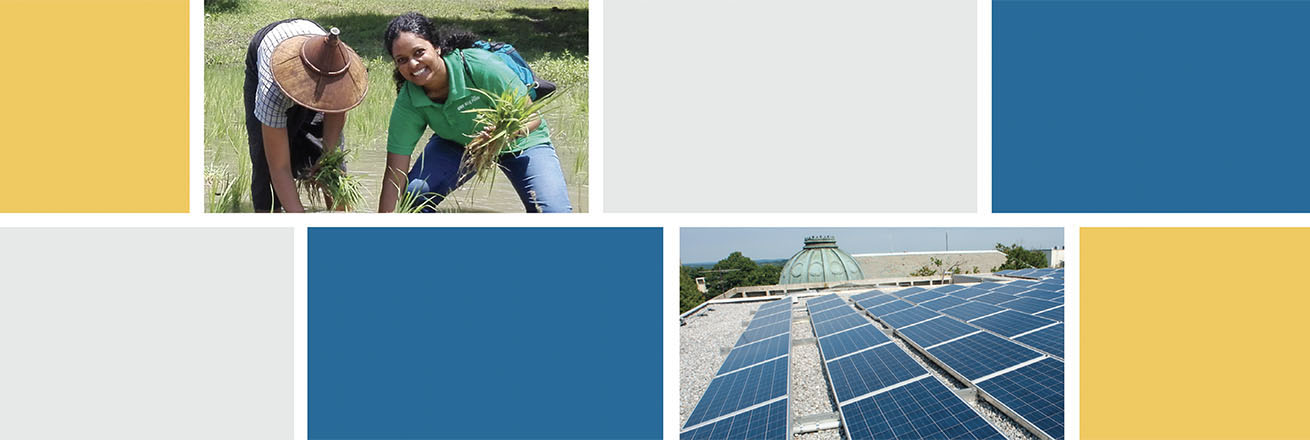 Annual report cover - student works in rice field on environmental project and AU roof is covered in solar panels