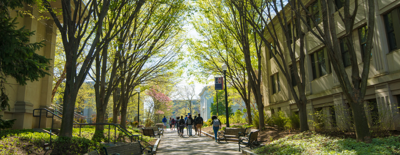Students walking across campus under trees