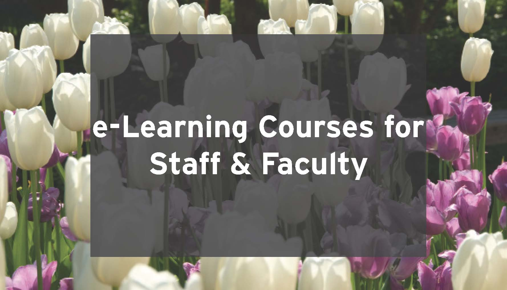 Background of summer flowers with words, e-learning courses for faculte and staff