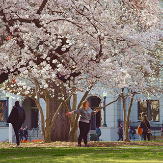 Students frolicking under the cherry blossoms on the quad