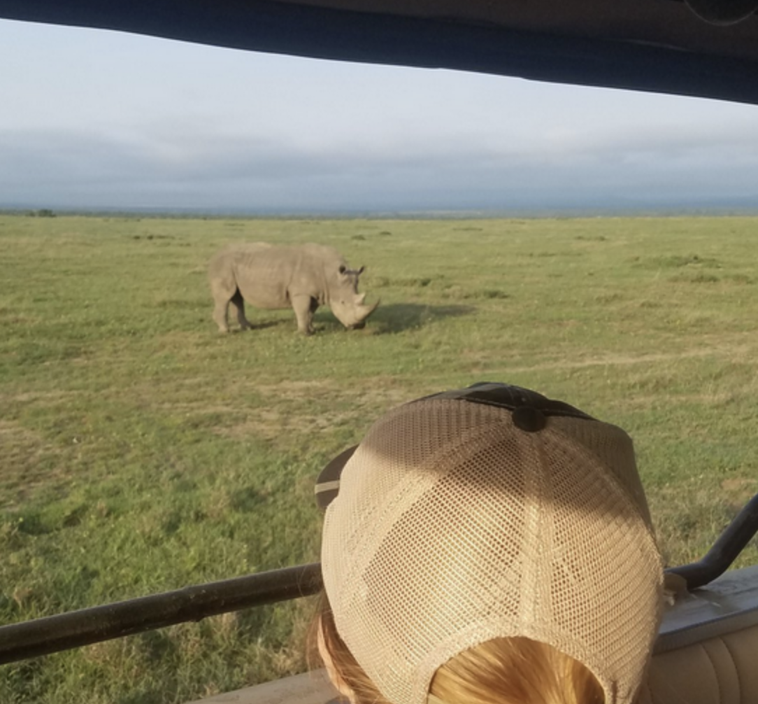 Student peering over the side of a van at a rhino on safari.