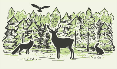 illustration of woodland creatures in a forest