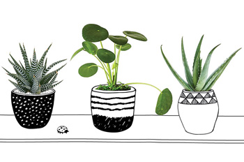 Shannon Post's favorite houseplants