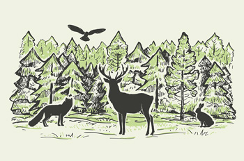 woodland creatures in a forest