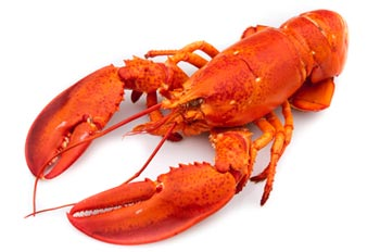 Bright red lobster