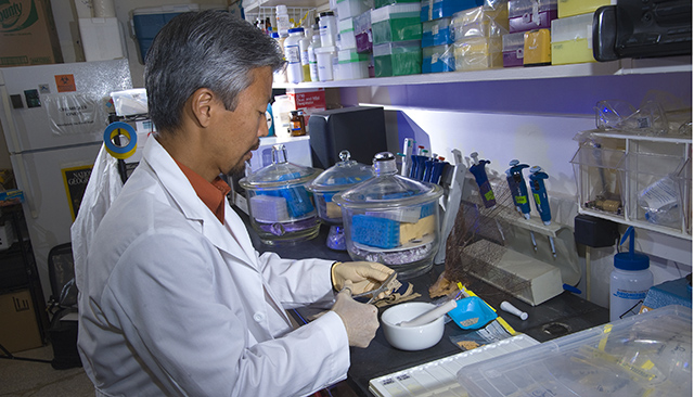 Kiho Kim examines coral in his lab.
