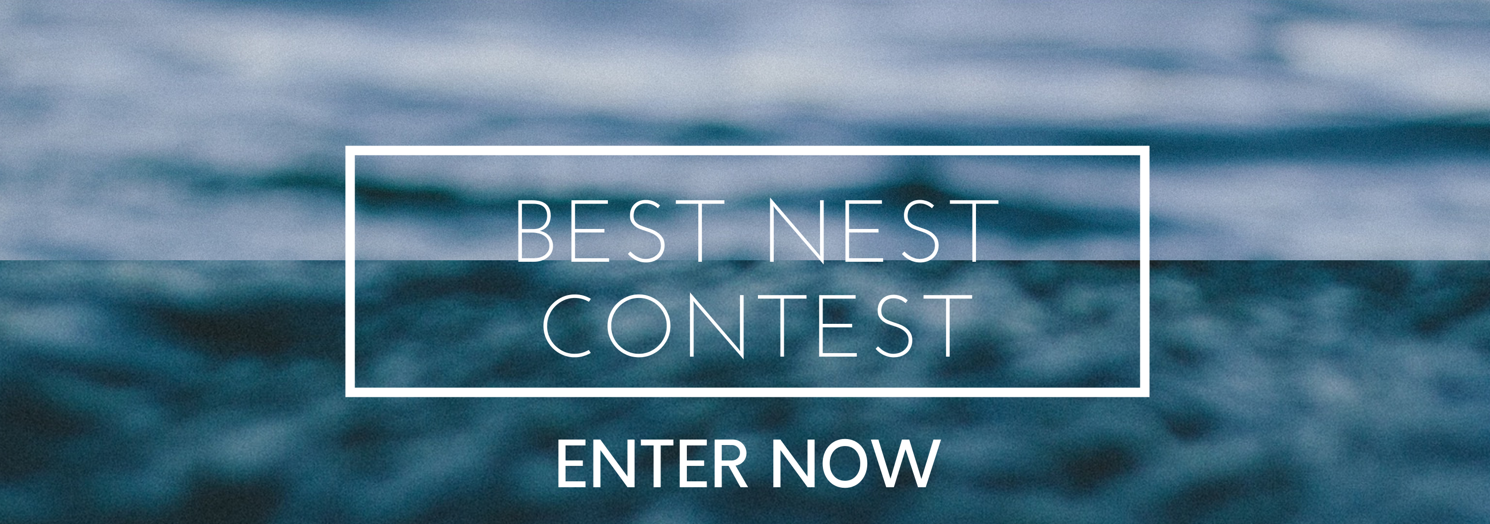 Bet Nest Contest