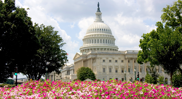 United States Capitol with light and dark pink petunias in front