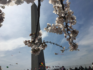 Springtime at the Washington Monument