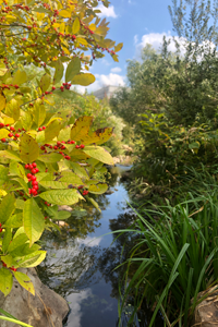 Bright green leaves with red berries