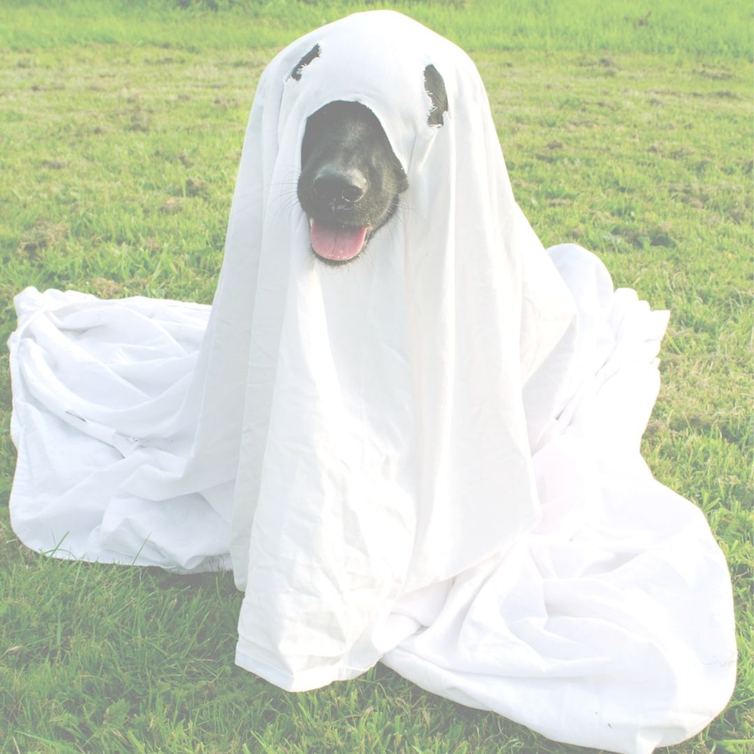 ghost costume on dog