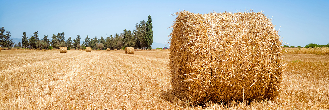 hay bales sit in a field