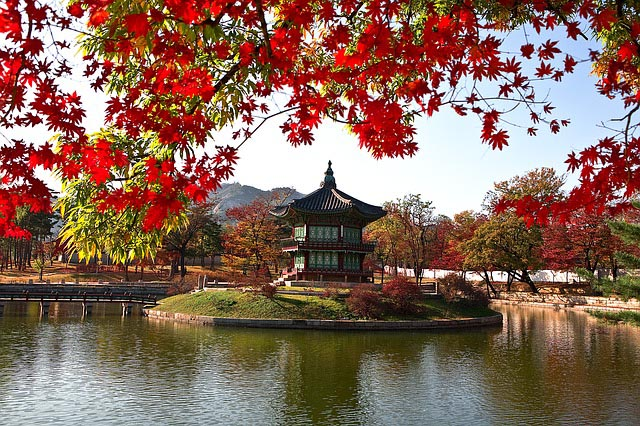 bright red flowers line the Gyeonbokgung Palace in Korea