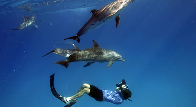 Student films dolphins underwater