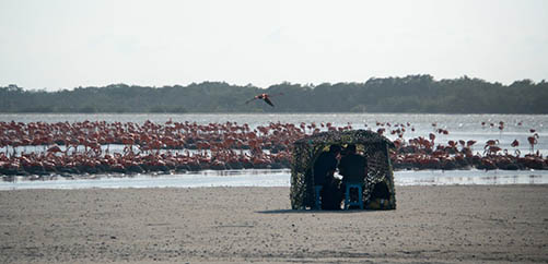 flamingoes on beach and film crew