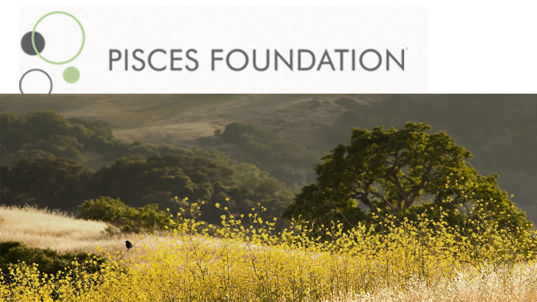 Internship Opportunity with Pisces Foundation