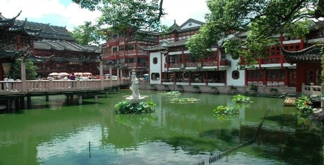 China Lily Pond
