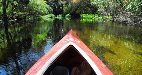 Center for Environmental Filmmaking students canoe through the Florida wetlands