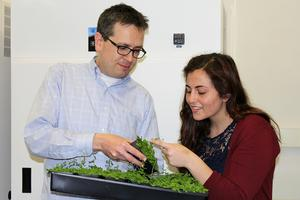 Naden Krogan and Maryam Yamadi (right) examine the model plant Arabidopsis thaliana. Credit: Brenda Chow.