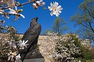The bronze eagle statue outside of AU's Bender Arena on a sunny spring day.