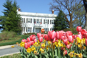 Tulips blooming in front of the President's Office Building.