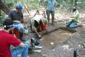 Professor Daniel Sayers working with students in the Great Dismal Swamp.