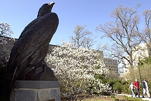 Thinking of becoming an Eagle? Why you should go to Preview Day.