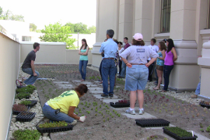 Students helping to install Kogod's green roof