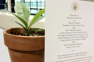 Seedling from the White House