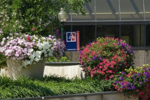 Photo of the hallway in front of the American University bookstore as seen from outside of the Tunnel. Flower pots with flowers in full bloom are in front of the building