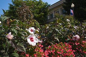 White and pink flowers in front of campus building