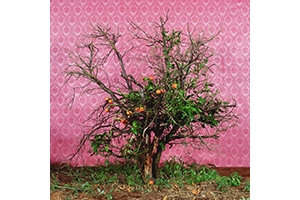 Tal Shochat. Crazy Tree (Detail). 2005. Photograph