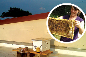 SIS professor Eve Bratman will move the hive atop SIS to Kreeger later this fall. (Photos courtesy of Eve Bratman)