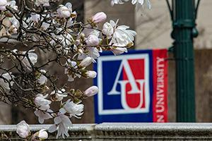 Blossoms on campus