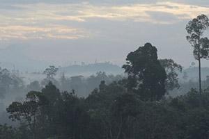 Borneo's Vanishing Landscape